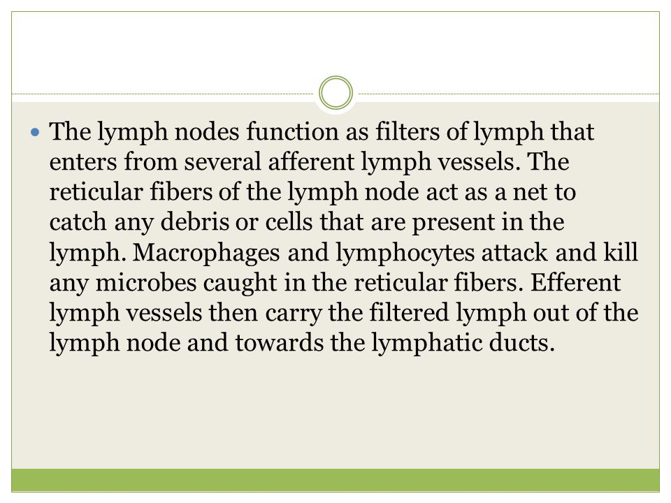 The lymph nodes function as filters of lymph that enters from several afferent lymph vessels.