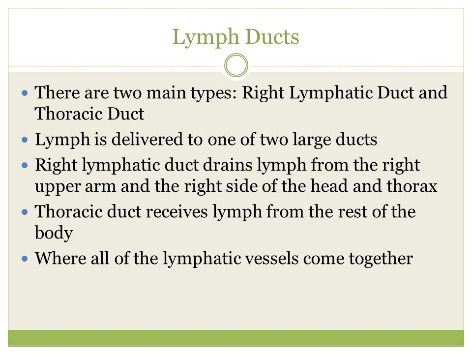 Lymph Ducts There are two main types: Right Lymphatic Duct and Thoracic Duct. Lymph is delivered to one of two large ducts.