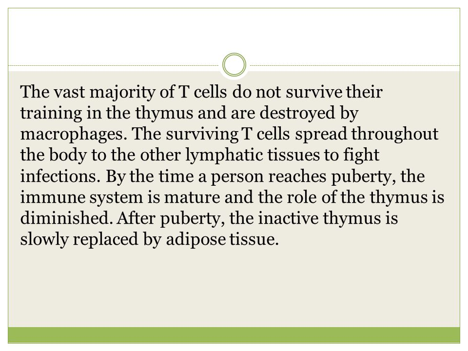 The vast majority of T cells do not survive their training in the thymus and are destroyed by macrophages.