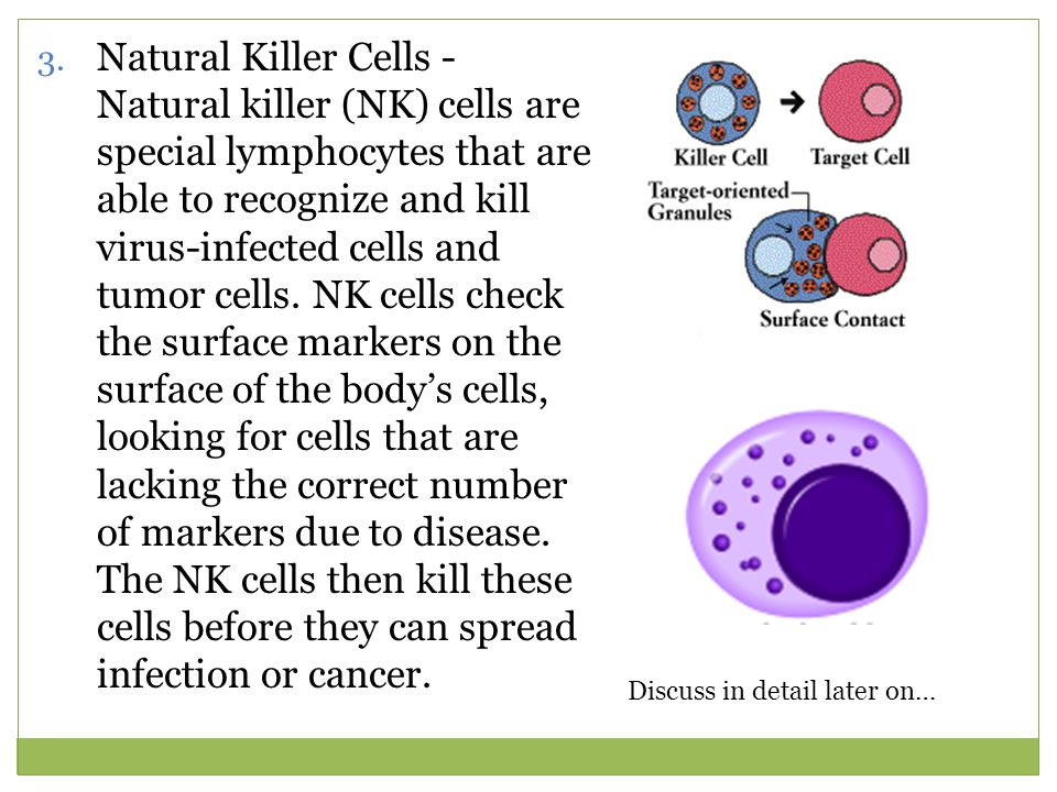 Natural Killer Cells - Natural killer (NK) cells are special lymphocytes that are able to recognize and kill virus-infected cells and tumor cells. NK cells check the surface markers on the surface of the body's cells, looking for cells that are lacking the correct number of markers due to disease. The NK cells then kill these cells before they can spread infection or cancer.