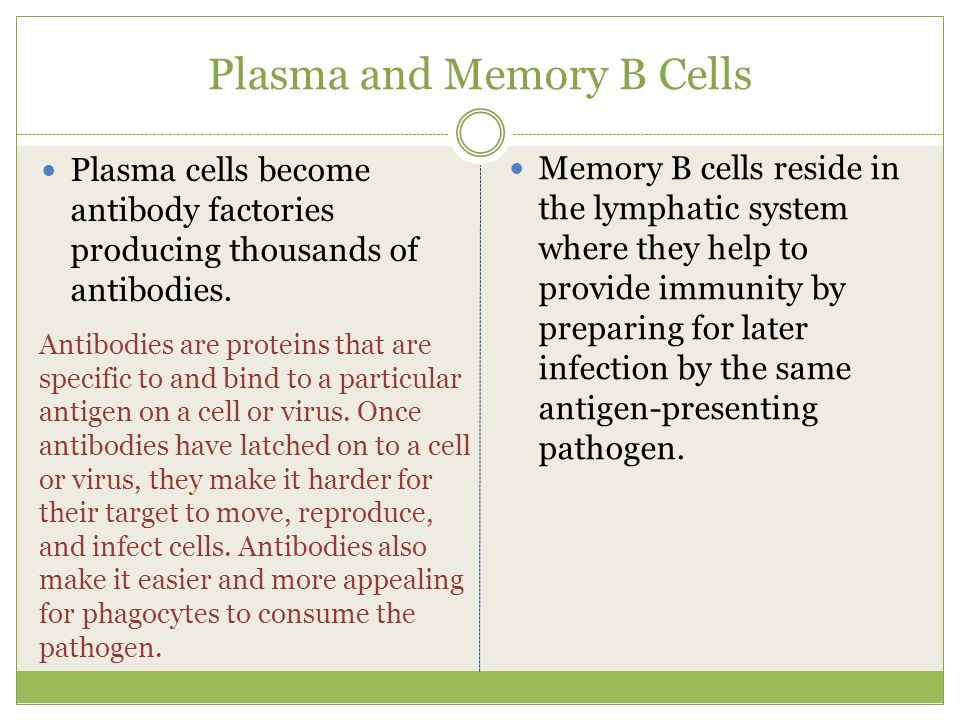 Plasma and Memory B Cells