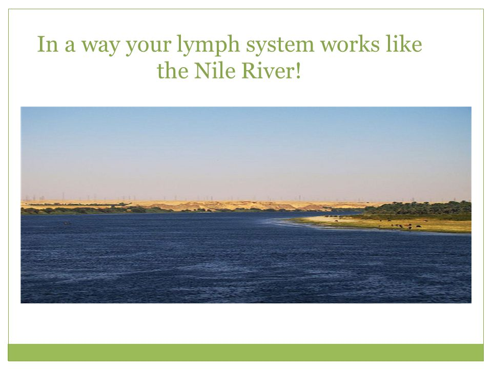 In a way your lymph system works like the Nile River!