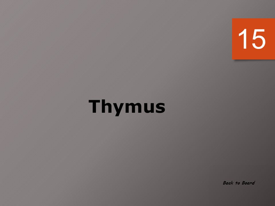 15 Thymus Back to Board