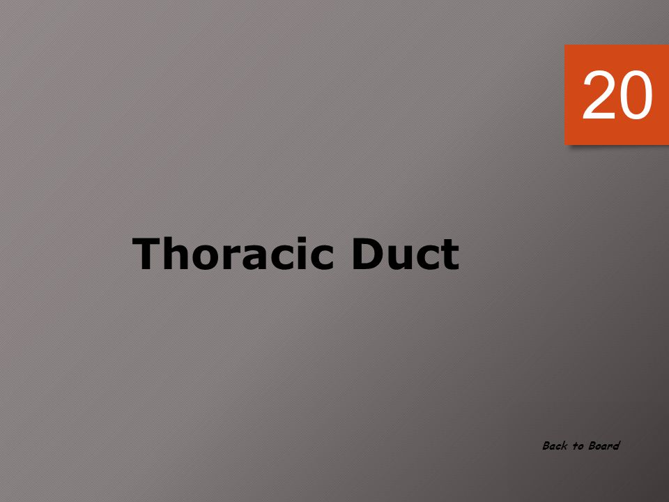 20 Thoracic Duct Back to Board