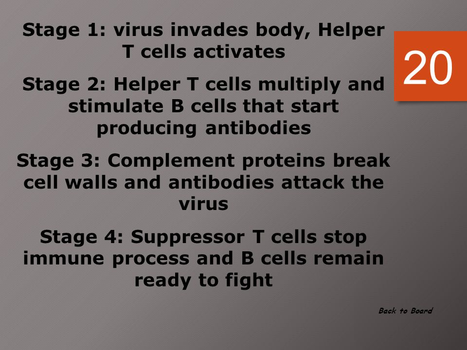 Stage 1: virus invades body, Helper T cells activates