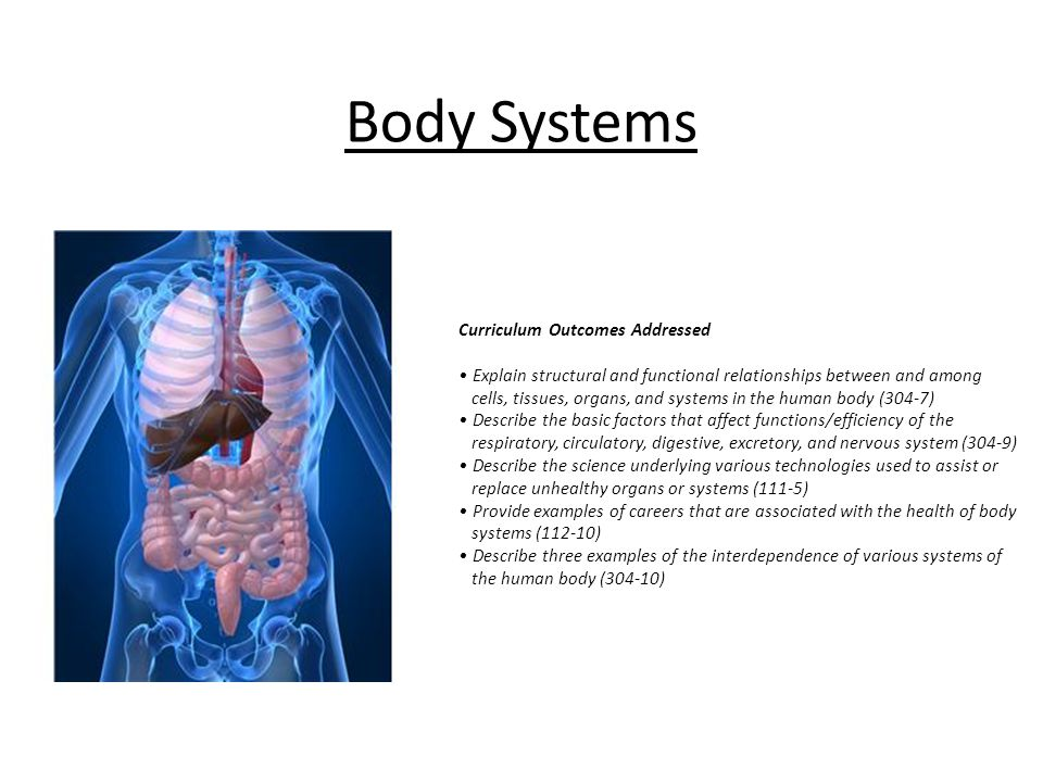 example to describe the relationship among cells tissues organs and organ systems