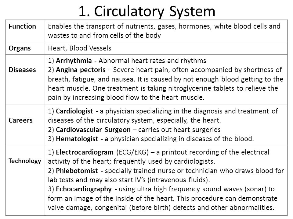 1. Circulatory System Function