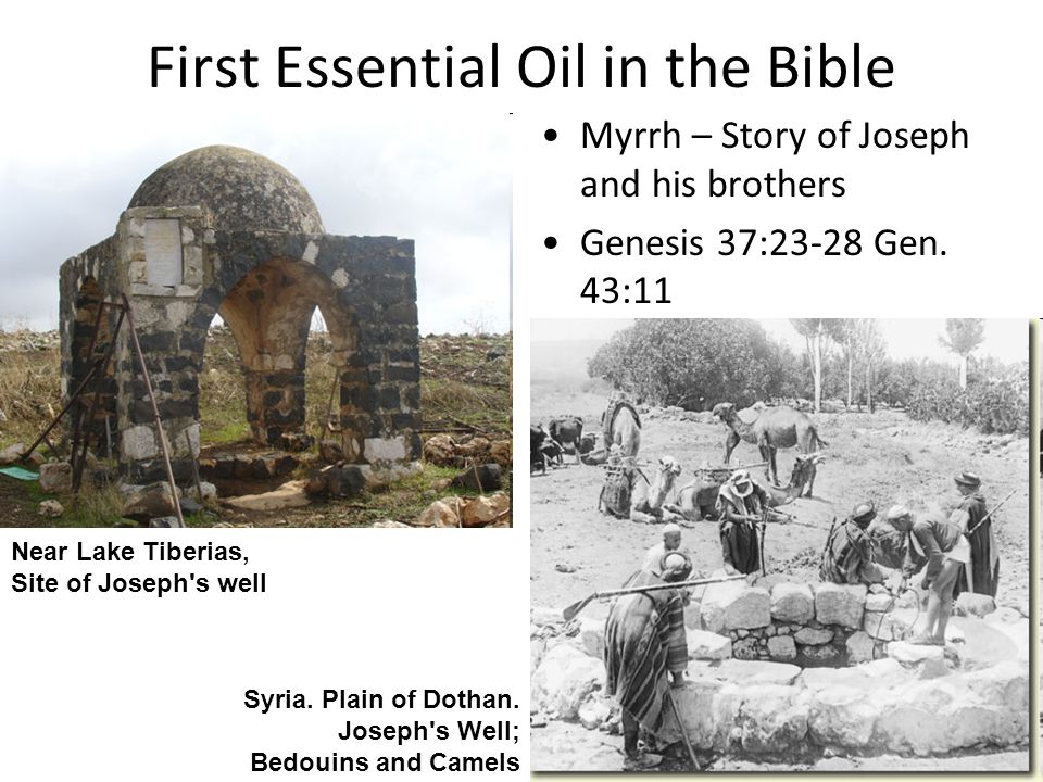 First Essential Oil in the Bible