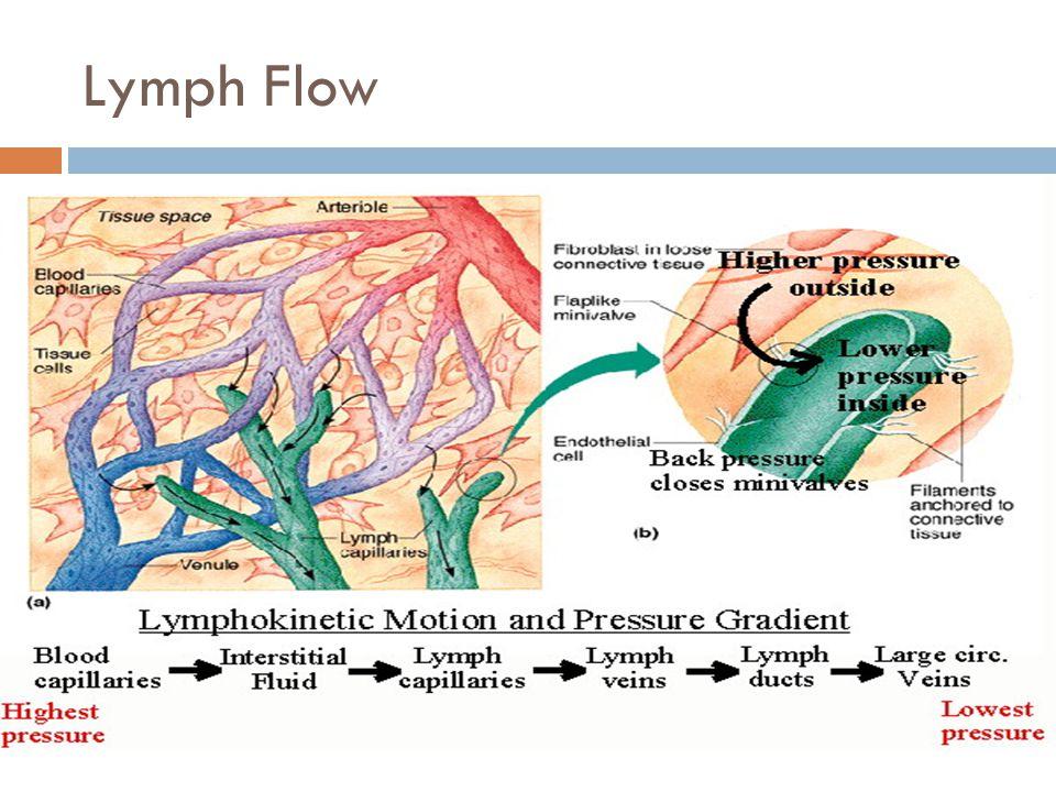 Lymph Flow