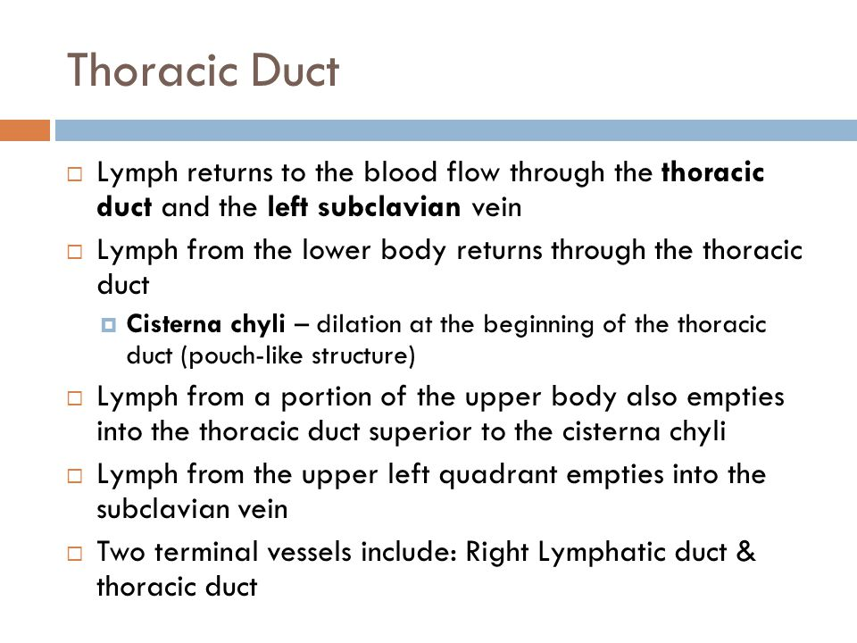 Thoracic Duct Lymph returns to the blood flow through the thoracic duct and the left subclavian vein.