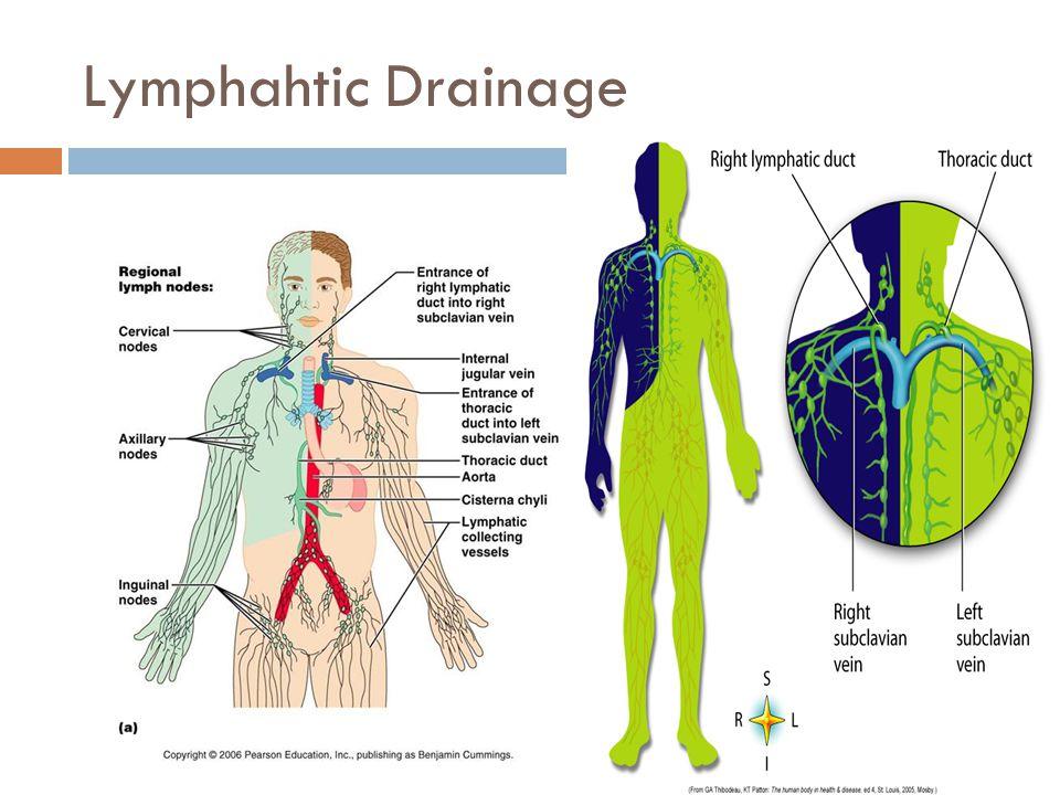 Lymphahtic Drainage