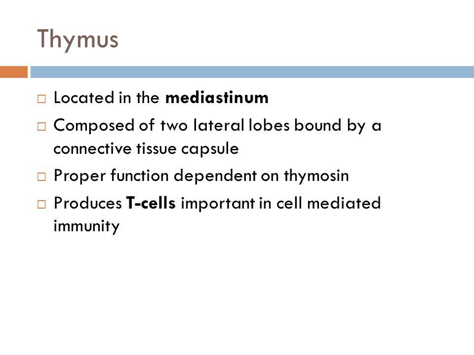 Thymus Located in the mediastinum