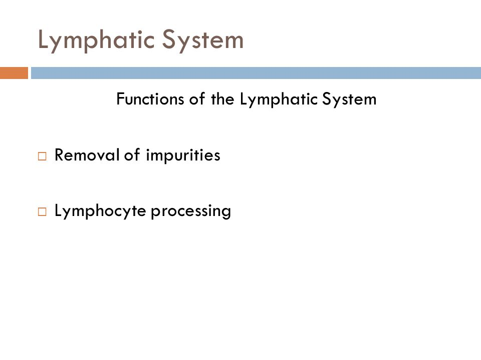 Functions of the Lymphatic System