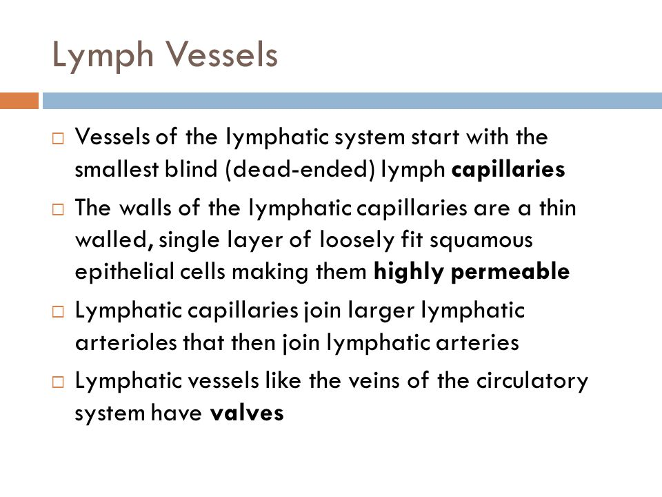 Lymph Vessels Vessels of the lymphatic system start with the smallest blind (dead-ended) lymph capillaries.
