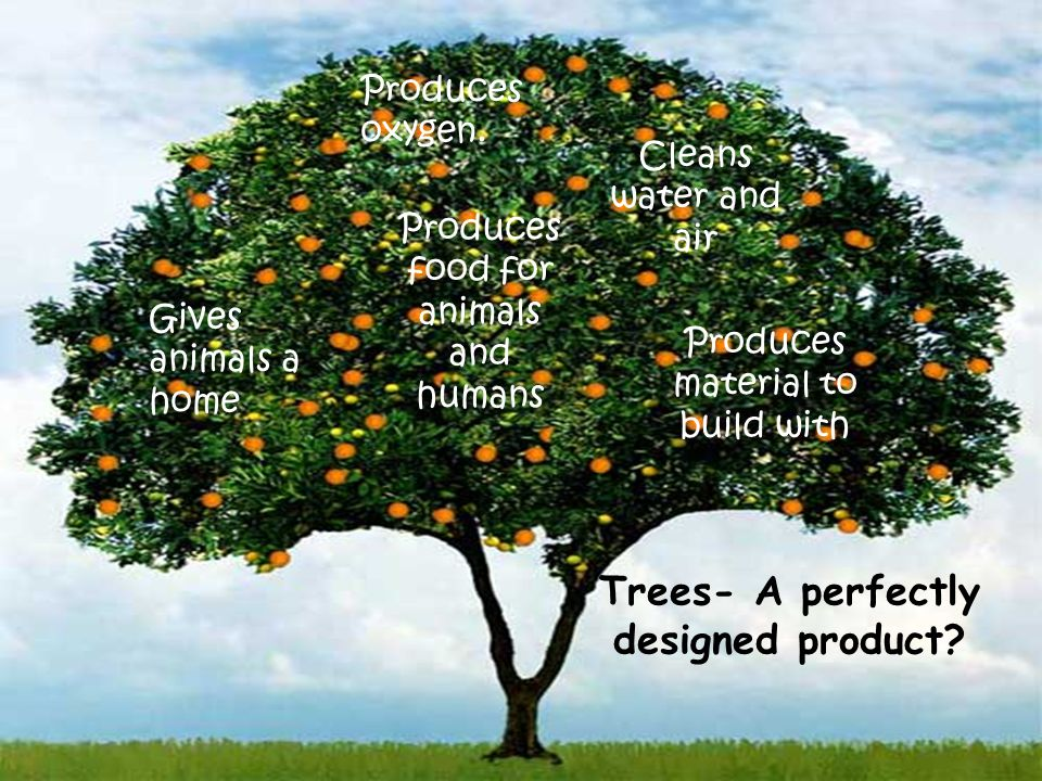 Trees- A perfectly designed product