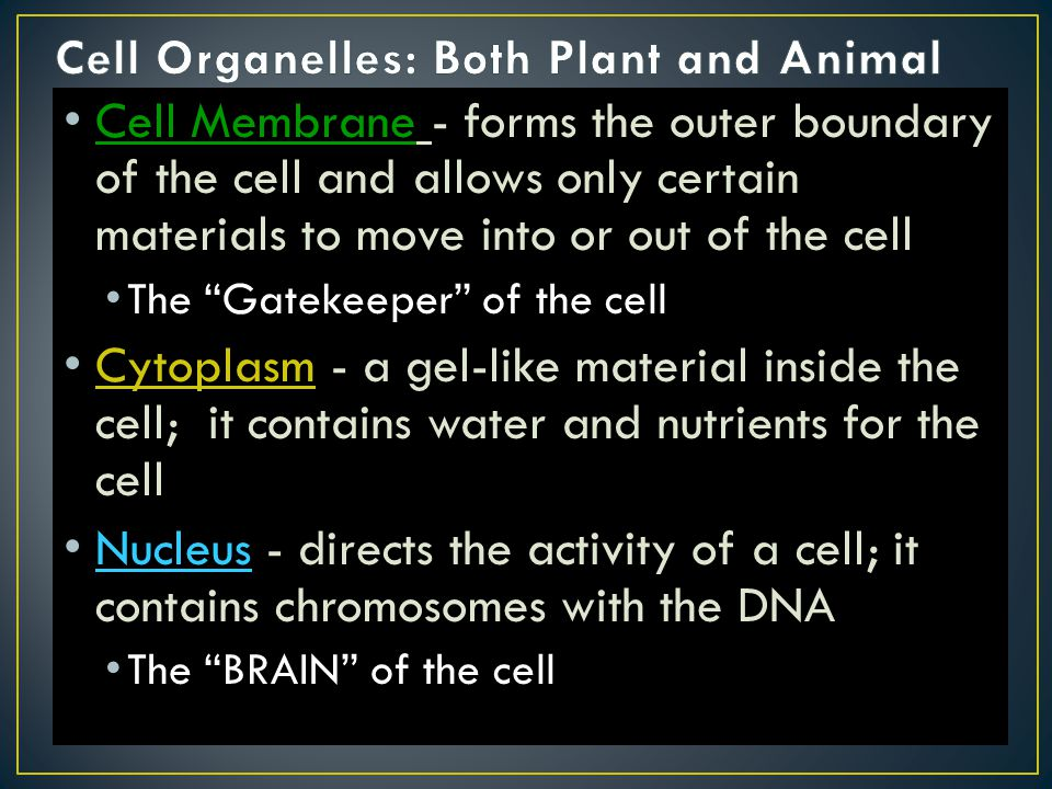 Cell Organelles: Both Plant and Animal