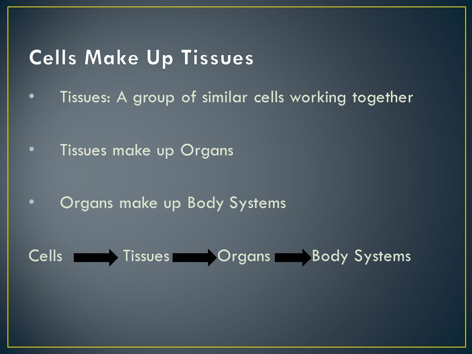 Cells Make Up Tissues Tissues: A group of similar cells working together. Tissues make up Organs. Organs make up Body Systems.