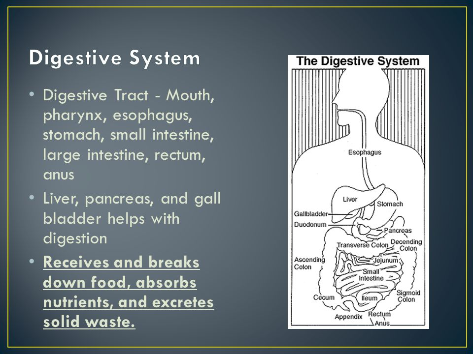 Digestive System Digestive Tract - Mouth, pharynx, esophagus, stomach, small intestine, large intestine, rectum, anus.