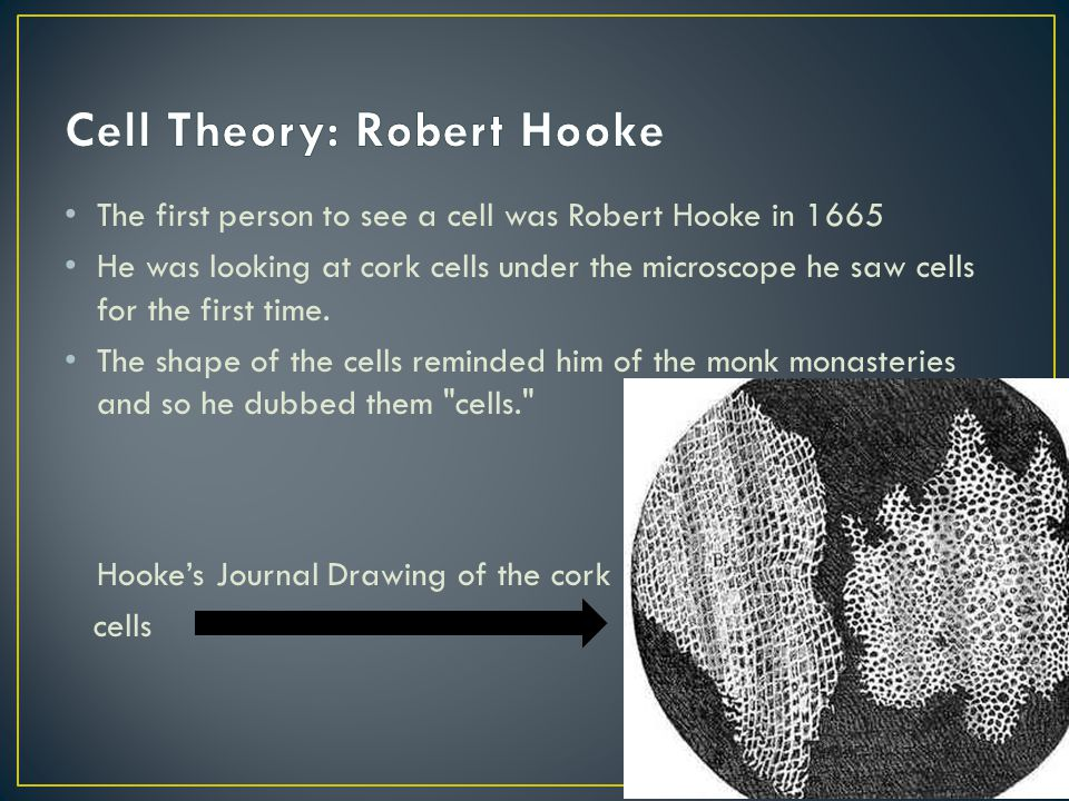 Cell Theory: Robert Hooke
