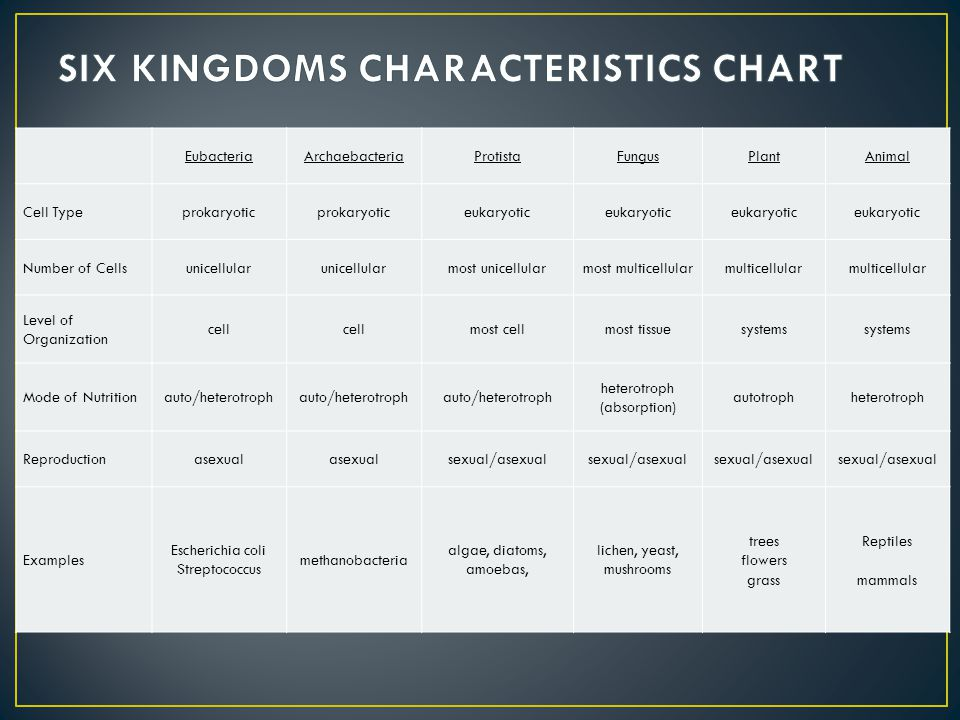 What are the characteristics of the kingdom fungi?
