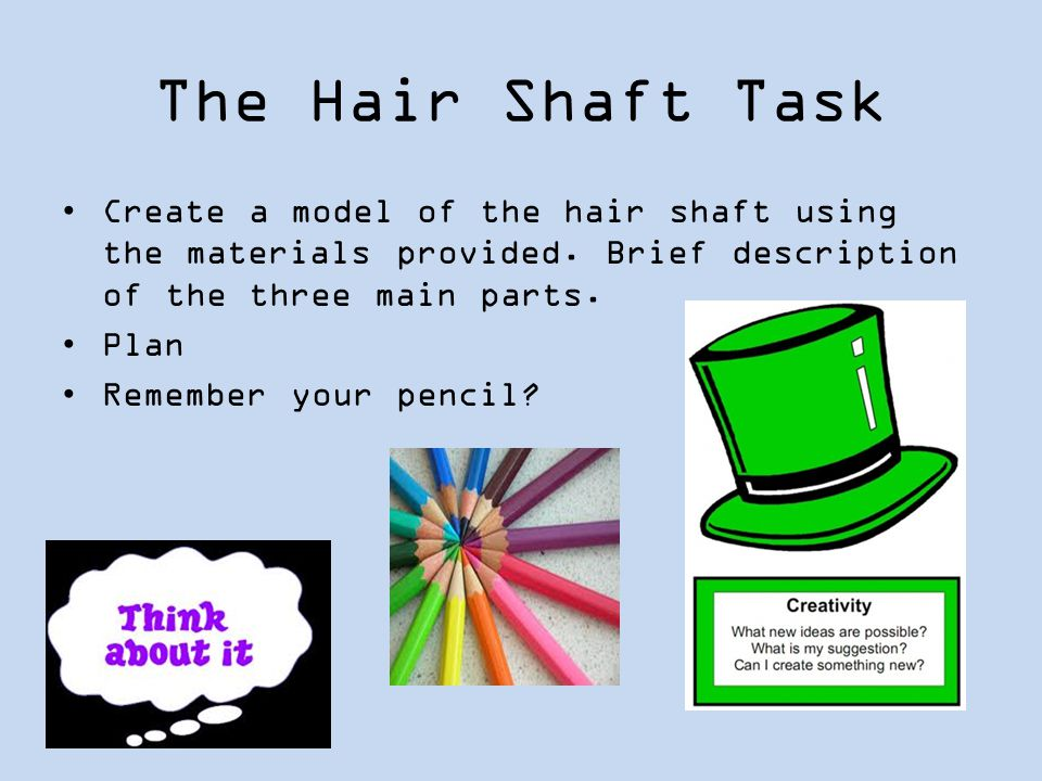 The Hair Shaft Task Create a model of the hair shaft using the materials provided. Brief description of the three main parts.