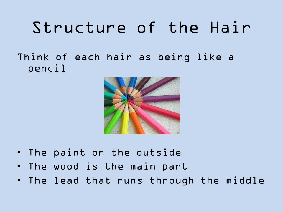 Structure of the Hair Think of each hair as being like a pencil