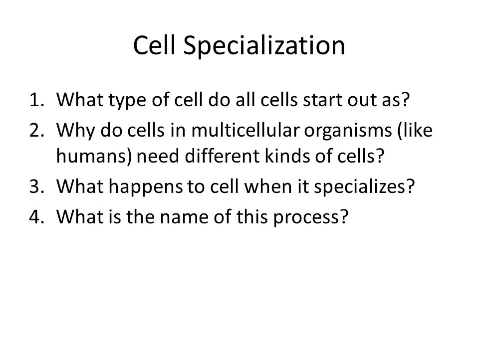 Cell Specialization What type of cell do all cells start out as