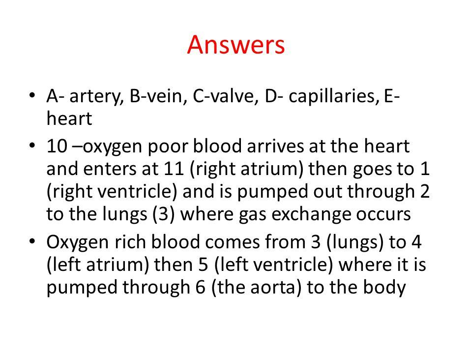 Answers A- artery, B-vein, C-valve, D- capillaries, E- heart