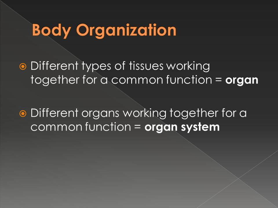 Body Organization Different types of tissues working together for a common function = organ.
