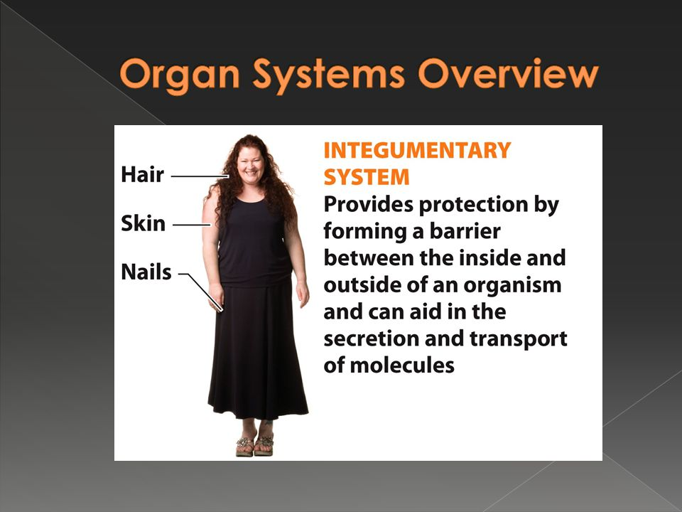 Organ Systems Overview