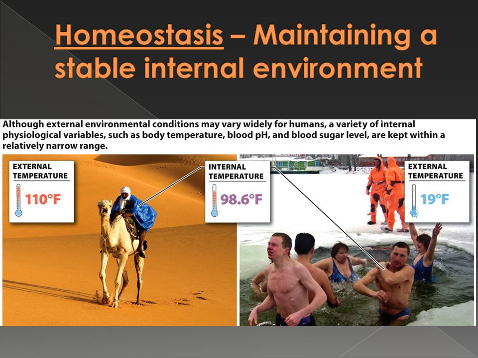 Homeostasis – Maintaining a stable internal environment