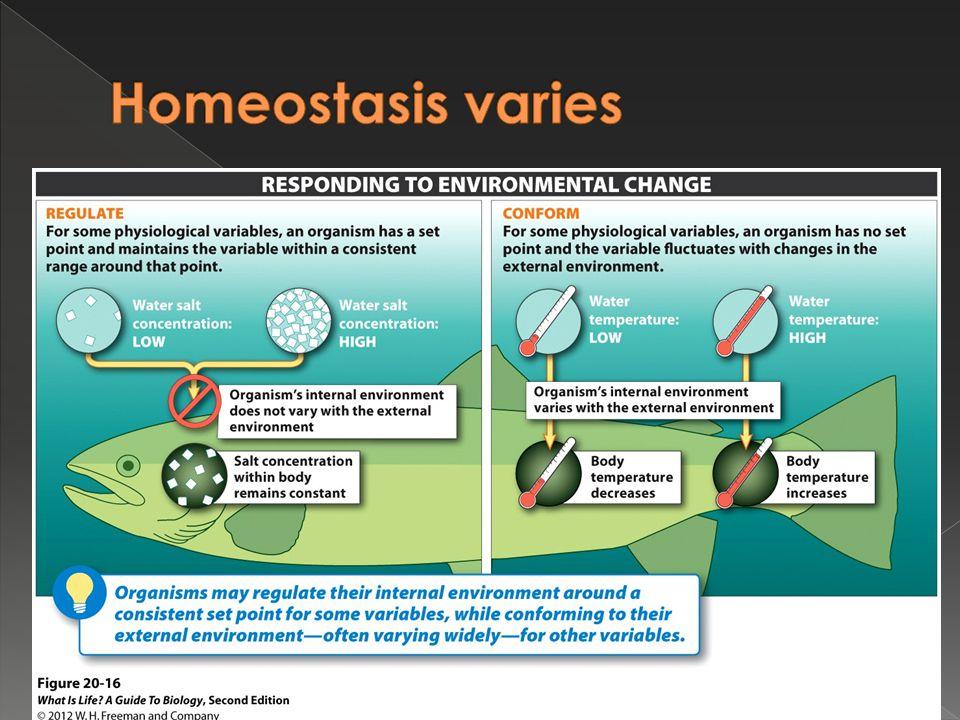 Homeostasis varies