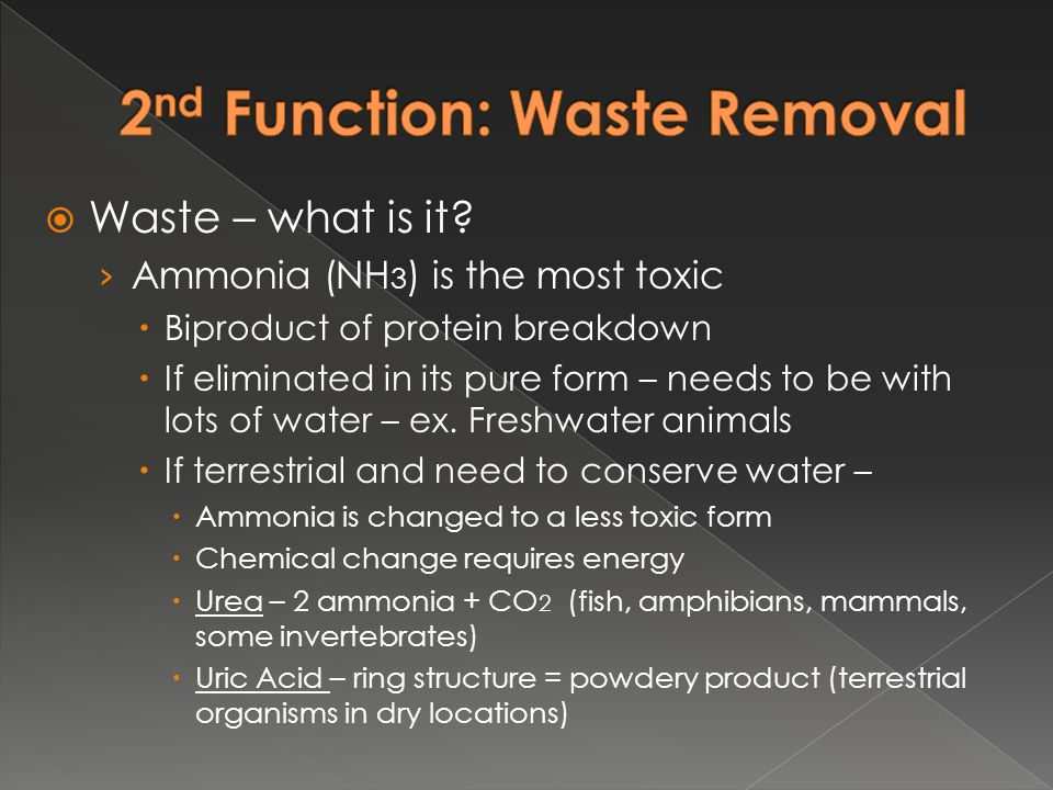 2nd Function: Waste Removal