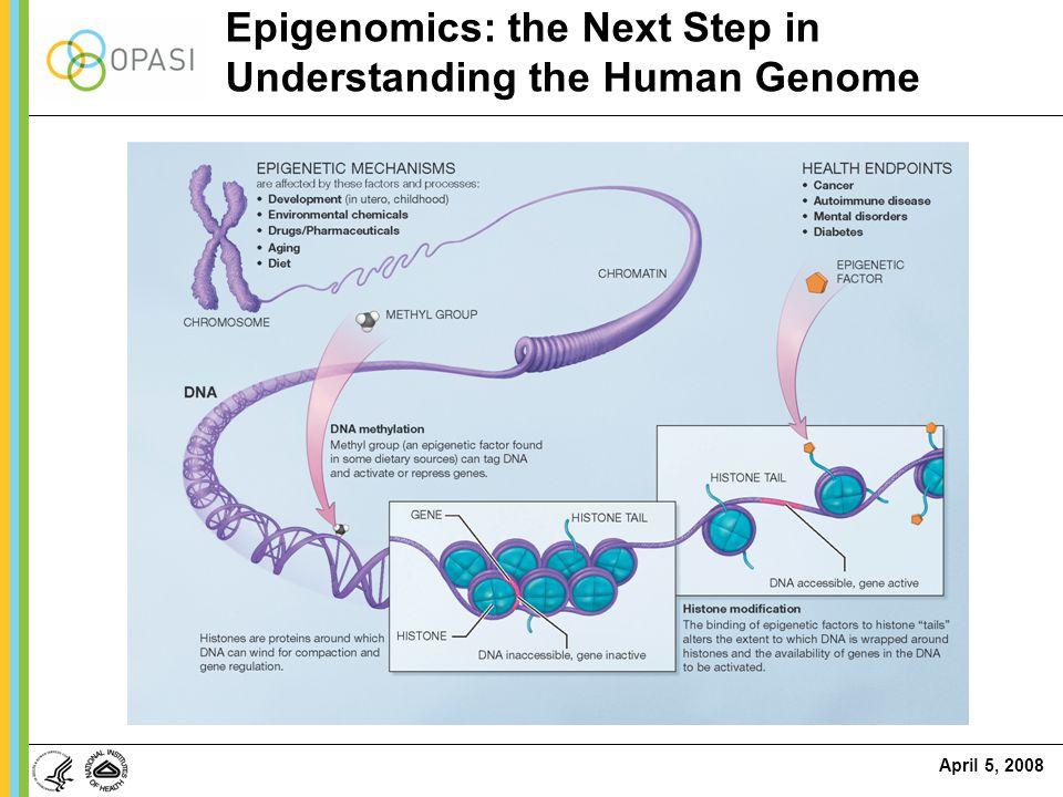 Epigenomics: the Next Step in Understanding the Human Genome