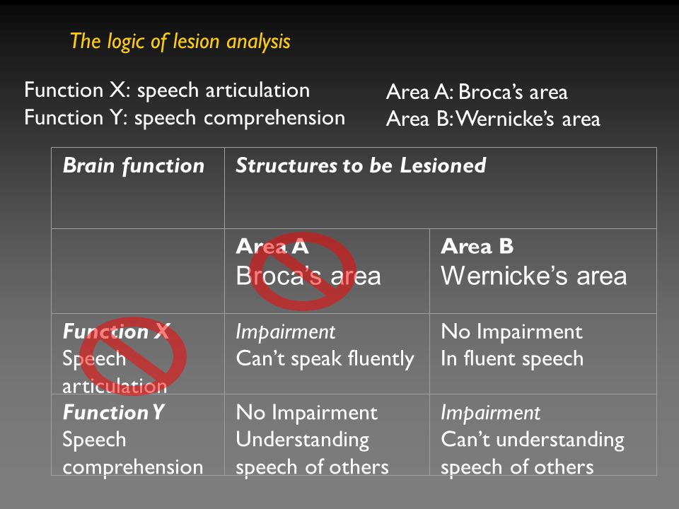 Function X: speech articulation Function Y: speech comprehension