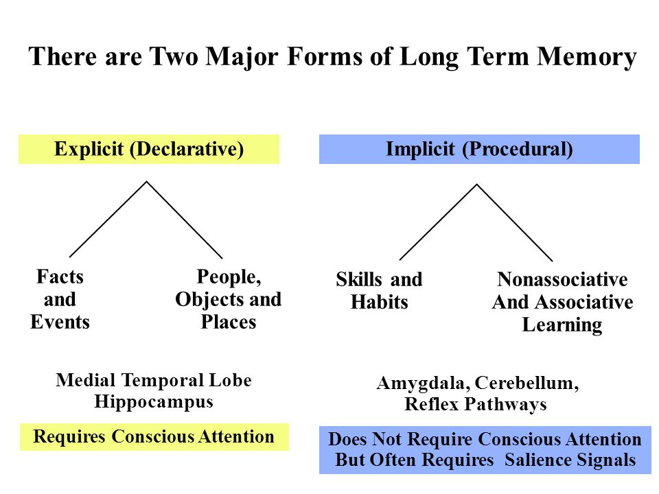 There are Two Major Forms of Long Term Memory