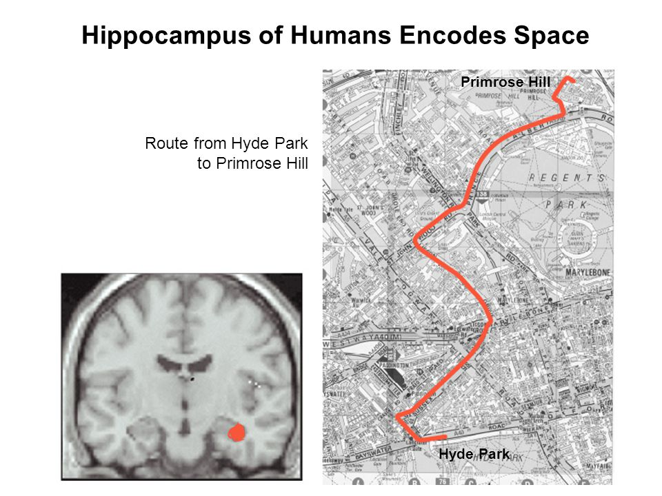 Hippocampus of Humans Encodes Space