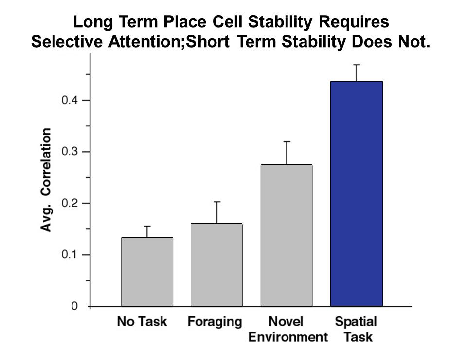 Long Term Place Cell Stability Requires