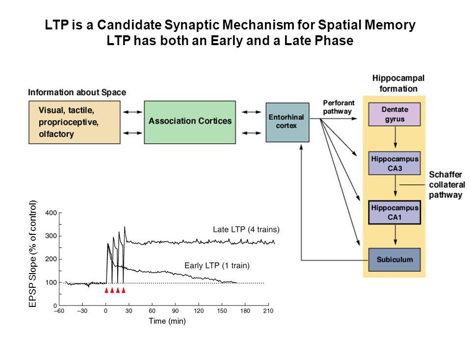 EPSP Slope (% of control)