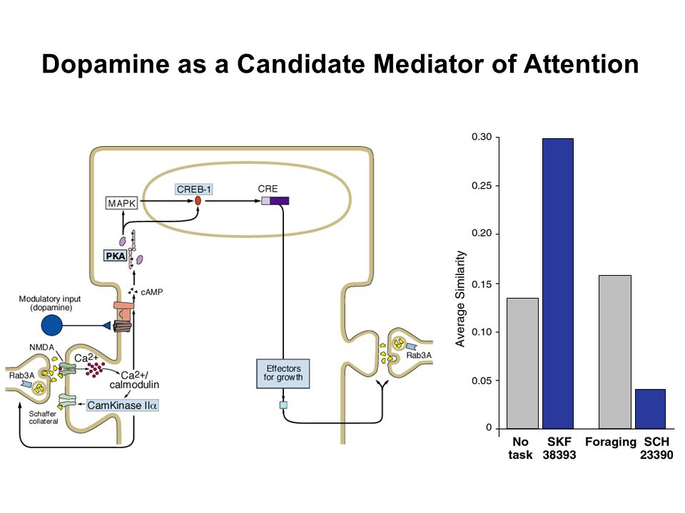 Dopamine as a Candidate Mediator of Attention