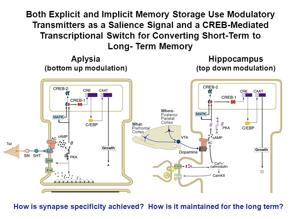 Both Explicit and Implicit Memory Storage Use Modulatory