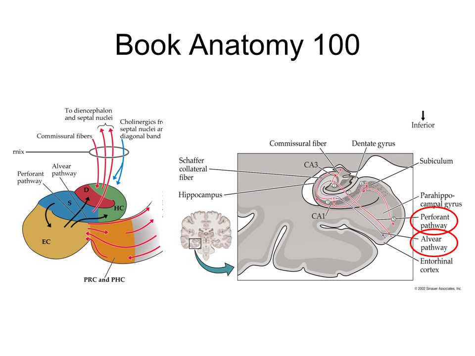 Book Anatomy 100