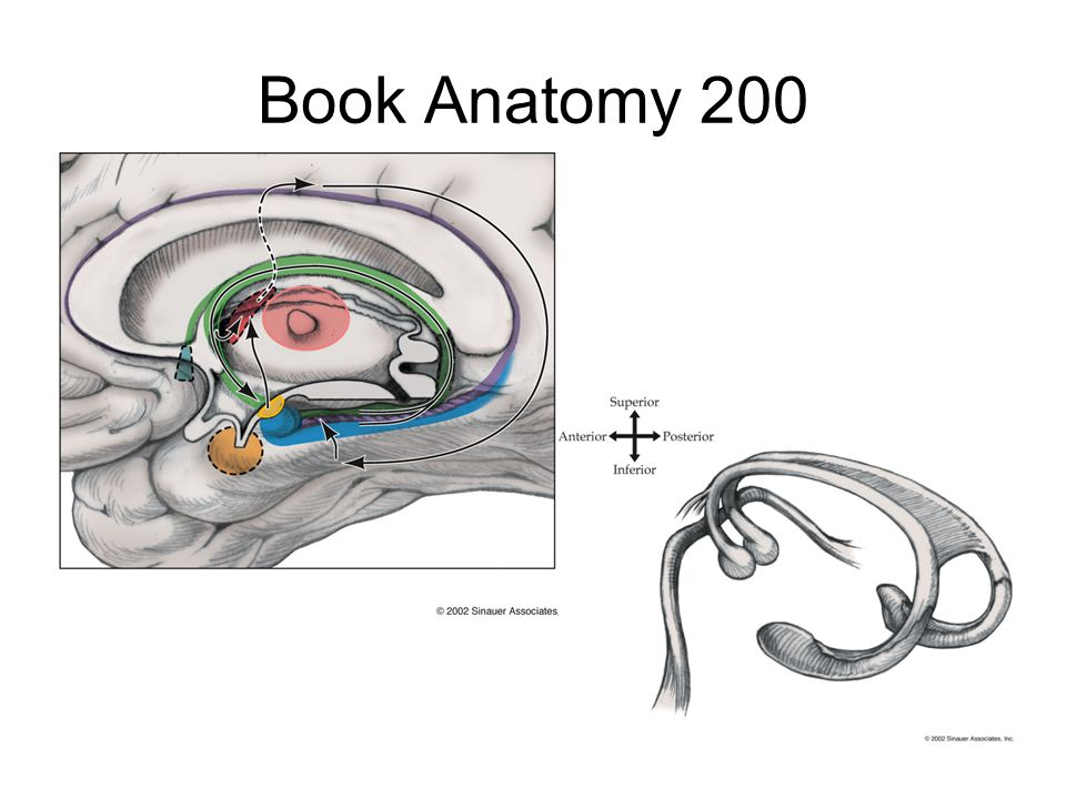Book Anatomy 200