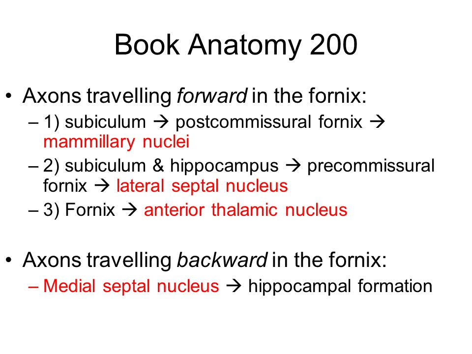 Book Anatomy 200 Axons travelling forward in the fornix: