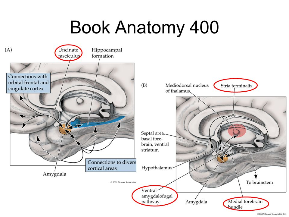 Book Anatomy 400