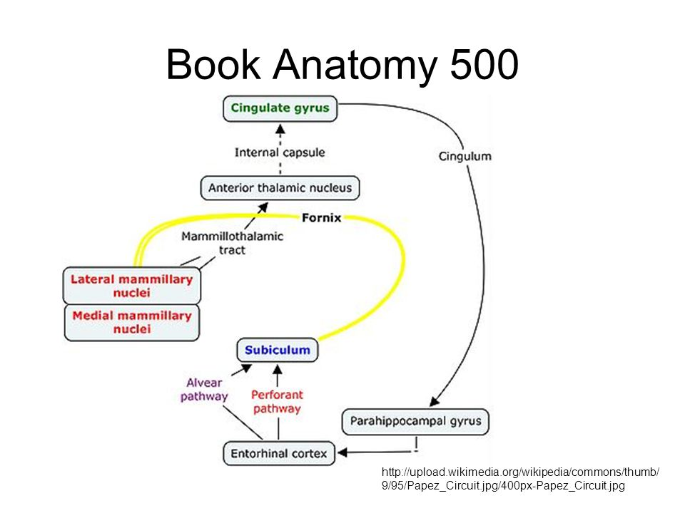 Book Anatomy 500 http://upload.wikimedia.org/wikipedia/commons/thumb/9/95/Papez_Circuit.jpg/400px-Papez_Circuit.jpg.