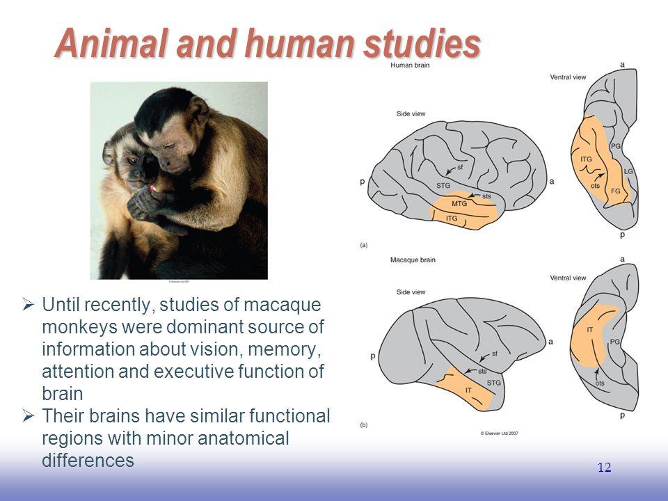 Animal and human studies