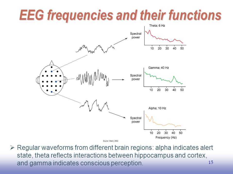 EEG frequencies and their functions