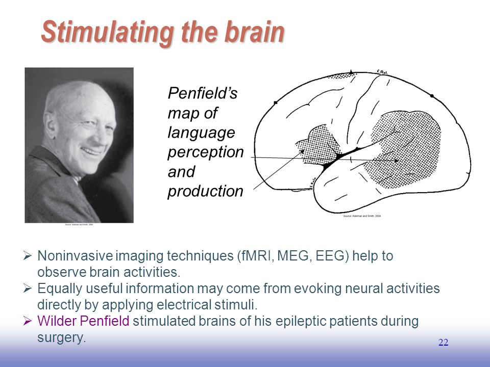 Stimulating the brain Penfield's map of language perception and production.