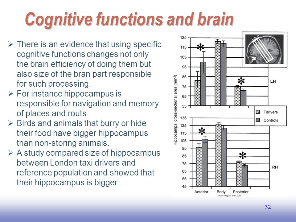Cognitive functions and brain